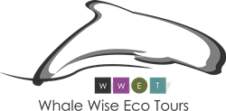 Whale Wise Eco Tour