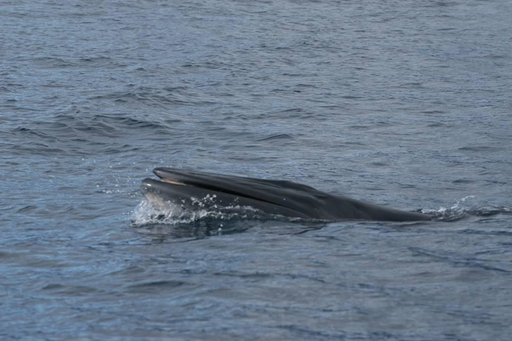 bride whale - wwet