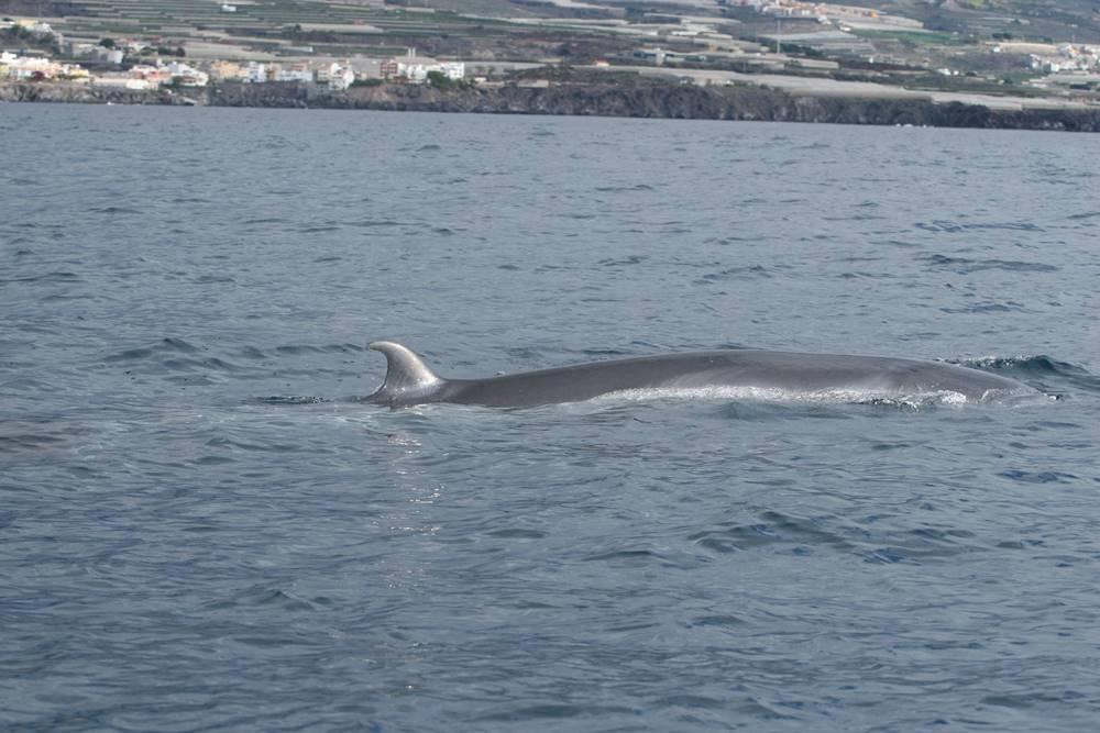 sei whale - wwet